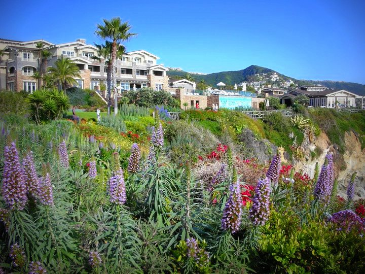 Laguna Beach Cabo Hotel Name