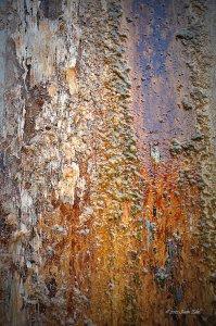 Living Algae Wall