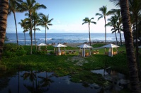 View from Palm Grove Room