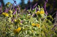 Natural Wildflowers