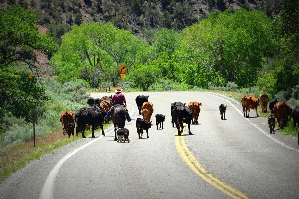 Colorado rush hour