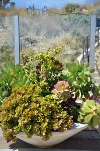 More beautiful succulents